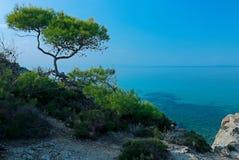Cypress en la costa, Grecia Imagen de archivo libre de regalías
