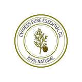 Cypress, essential oil label, aromatic plant Stock Photos