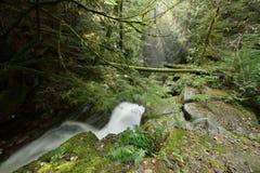 Cypress Falls Park Royalty Free Stock Photography