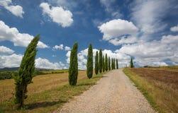 Cypress fodrad körbana i Tuscany, Italien Arkivbilder
