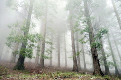 Cypress forest Stock Photos