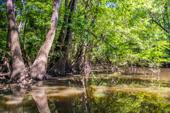 Cypress forest and of Congaree National Park in South Caro Stock Images