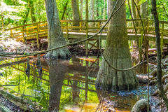 Cypress forest and of Congaree National Park in South Caro Royalty Free Stock Photography
