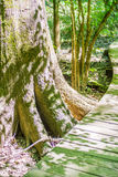 Cypress forest and swamp of Congaree National Park in South Caro Royalty Free Stock Photos