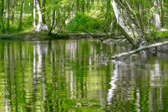 Cypress forest and swamp of Congaree National Park in South Caro Stock Photos