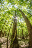 Cypress forest and swamp of Congaree National Park in South Caro Royalty Free Stock Photo