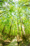 Cypress forest and swamp of Congaree National Park in South Caro Stock Photo