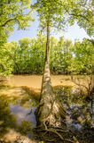 Cypress forest and swamp of Congaree National Park in South Caro Stock Image