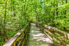 Cypress forest and swamp of Congaree National Park in South Caro Royalty Free Stock Images