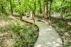 Cypress forest swamp of Congaree National Park in South Caro Royalty Free Stock Image
