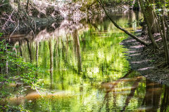Cypress forest swamp of Congaree National Park in South Caro Stock Image