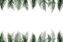 Cypress frame Royalty Free Stock Images