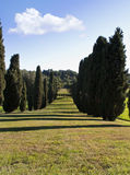 Cypress garden Royalty Free Stock Photography