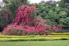 The Cypress Garden in legoland florida Stock Photo