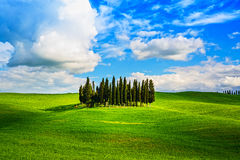Cypress group and field rural landscape in Orcia, San Quirico, T Stock Photos