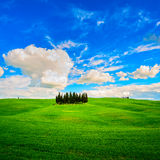 Cypress group and field rural landscape in Orcia, San Quirico, T Stock Photography