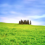 Cypress group and field rural landscape in Orcia, San Quirico, Tuscany. Italy Stock Photography