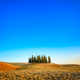 Cypress group and field rural landscape in Orcia, San Quirico, Tuscany. Italy stock images