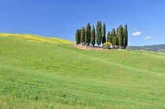 Cypress grove among hills Stock Photo