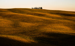 Cypress Grove Sunset in Tuscany Stock Image
