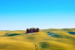 Cypress grupp och fältliggande. Orcia Tuscany Arkivfoto