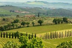 Cypress ha allineato la strada fra le vigne in Toscana, Italia fotografia stock