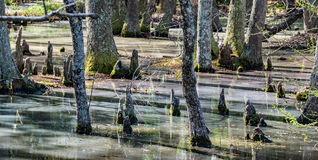 Cypress Head Swamp in South Carolina, USA. Cypress head swamp landscape located Sumter, South Carolina, USA stock images