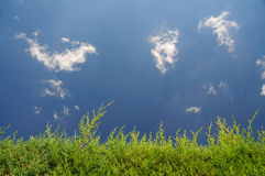 Cypress hedge. Sky, clouds and cypress hedge royalty free stock images