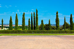 Cypress hedge in europe Royalty Free Stock Photo