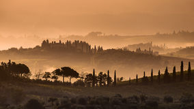 Cypress hills and Fog in Tuscany