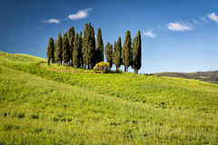 Cypress on hills, Tuscany, Italy Royalty Free Stock Image