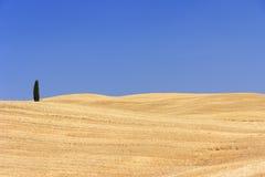 Cypress i den Tuscany ligganden Royaltyfri Bild