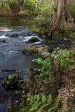 Cypress Knees, Hillsborough River. The scenic Hillsborough River winds through a subtropical landscape, Hillsborough River State Park, Southwest Florida Stock Photography
