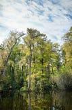 Cypress and lagoon Royalty Free Stock Photo