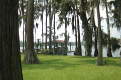 Cypress Lake Royalty Free Stock Images