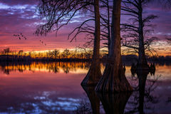Cypress Lake, scenic sunset, Southern Illinois Royalty Free Stock Photos