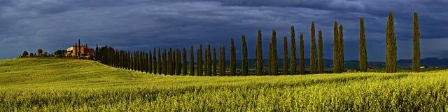 Cypress Lane Panorama Stock Photography