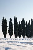 Cypress lined Stock Images