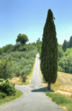 Cypress next to an uphill road Stock Photo