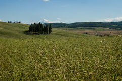 Cypress no Chianti imagem de stock