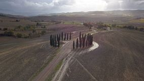 Cypress och jordbruksmark stock video