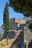 Cypress and Old Kotor Citadel. Cypress and ruins of old Kotor fortress on mountain slope Stock Images