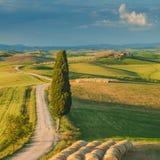 Cypress på vägen i mitt av den Tuscan bygden Arkivfoto