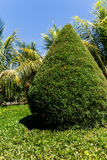 Cypress with palms from a garden Royalty Free Stock Photo
