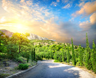 Cypress park in mountains Royalty Free Stock Images