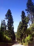 Cypress parkway in Boboli gardens in Florence. Italy Stock Images