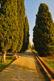 Cypress path Stock Photo