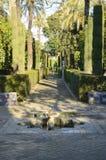 Cypress  path Stock Image