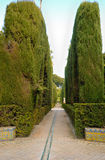 Cypress path Alcazar Stock Photography