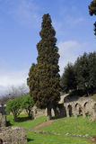 Cypress at Pompei Royalty Free Stock Images